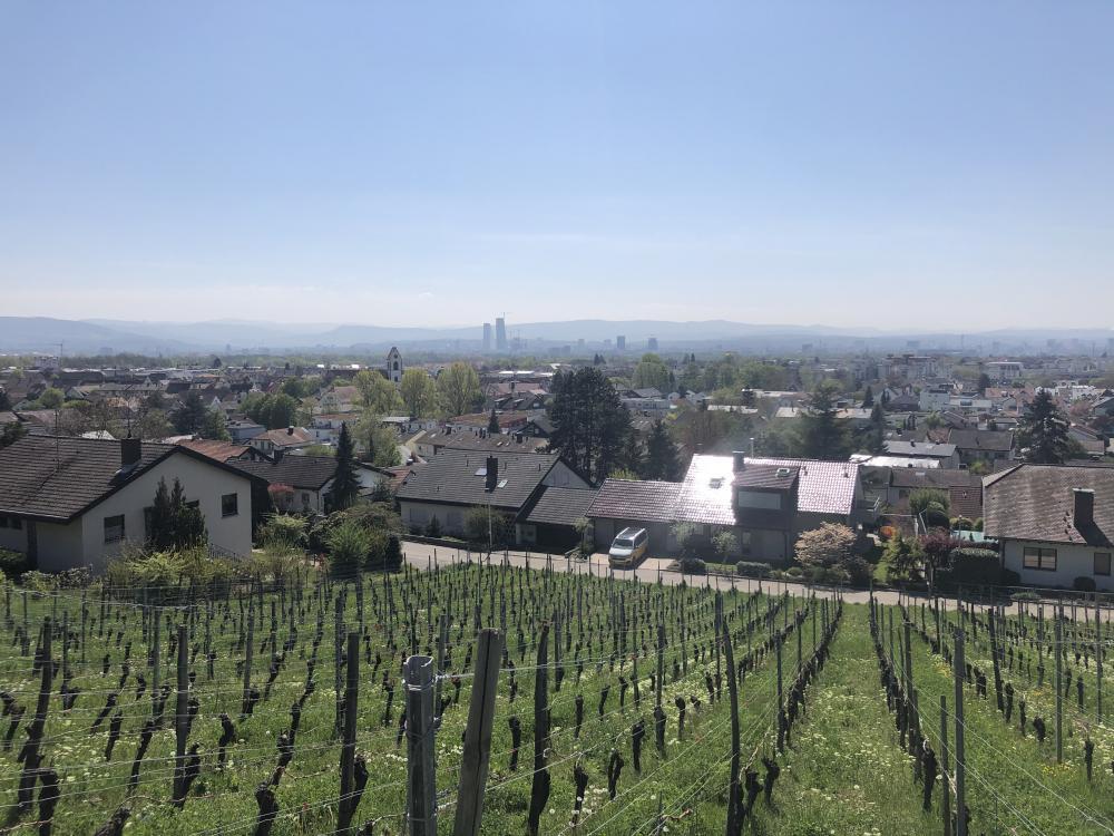 Vom Tüllinger Hügel aus hat man eine ganz nette Sicht auf die Stadt - es gibt Menschen, die sehen das vom Wohnzimmer aus!