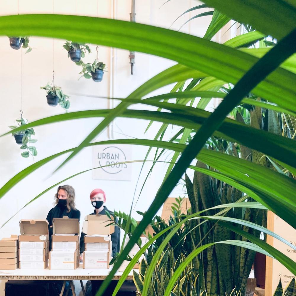 Am Pflanzenfestival Botanica gibt's nicht nur tolle Zimmerpflanzen der Pflanzerei zu kaufen, sondern unter anderem auch Saatboxen von Urbanroots.