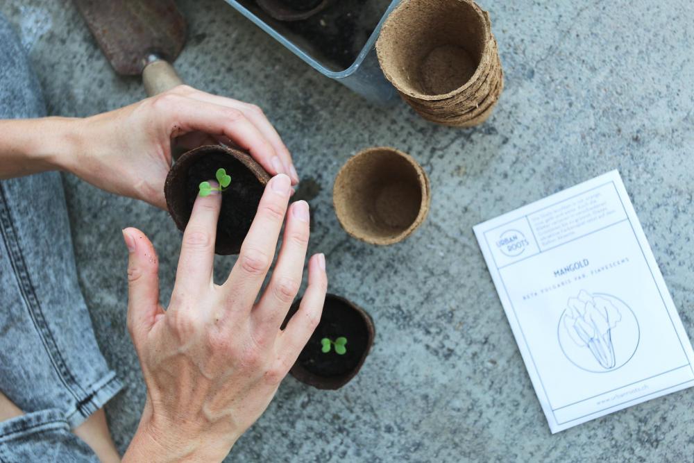 Beim Workshop von Urbanroots lernst du, wie du auch ohne Garten erfolgreich Gemüse anpflanzen kannst.